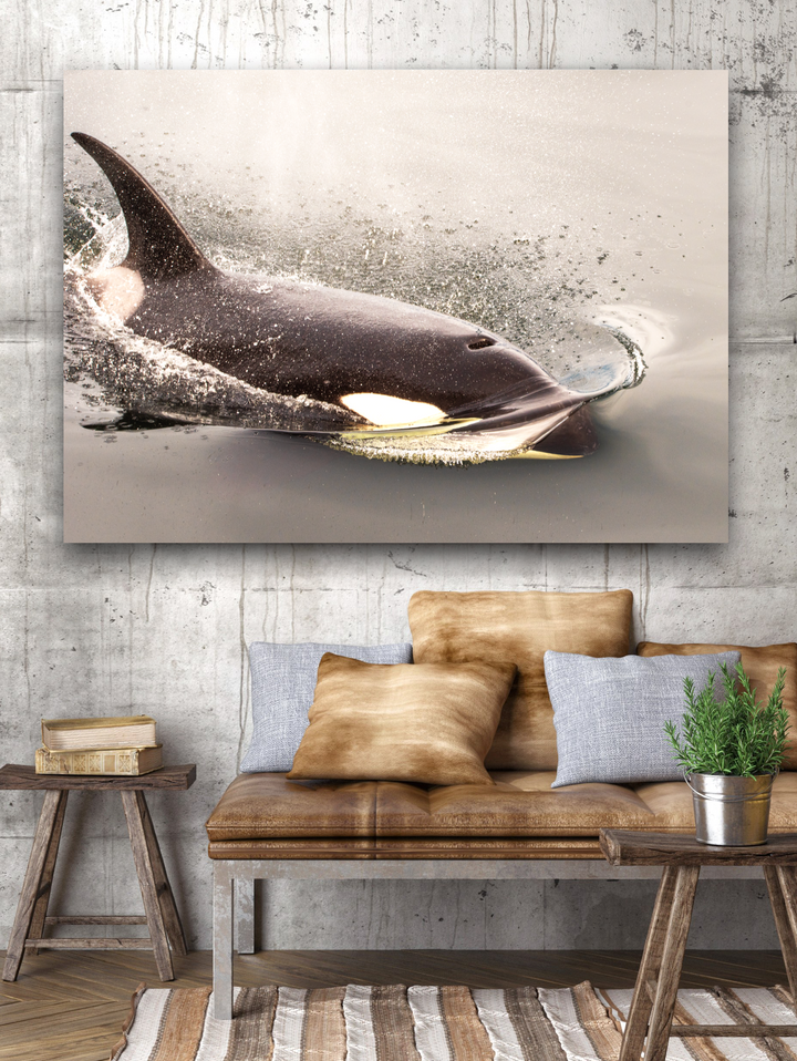 Orca Large Canvas - 40x30, 40x40, 60x40 (Custom sizes available)