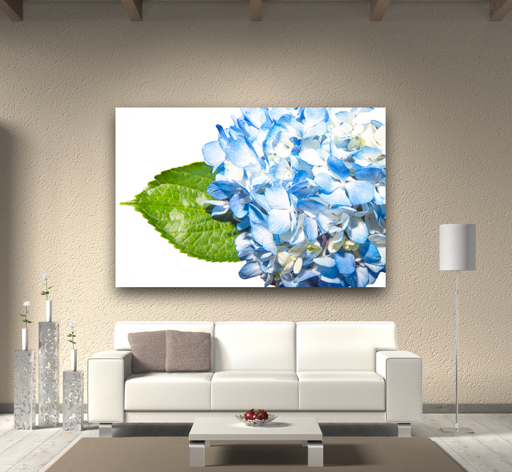 60x40 Large Canvas of a Blue Hydrangea
