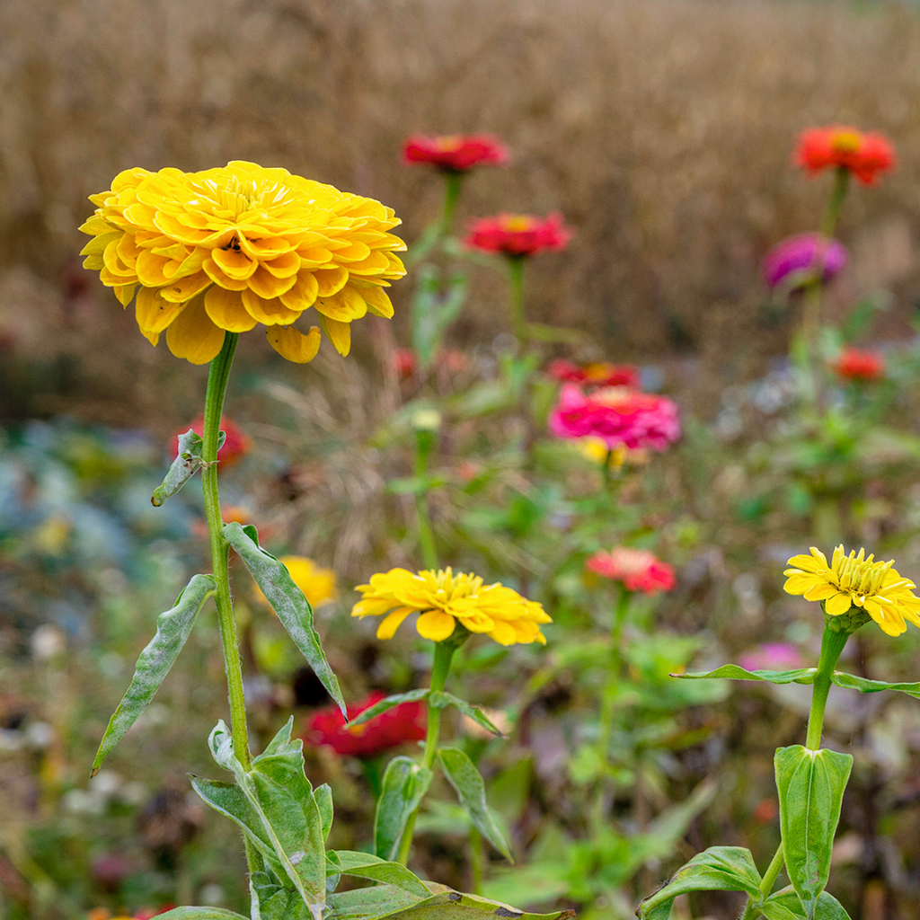 Closeup of Wildflowers at Hensler Farms | Wear the Wonder