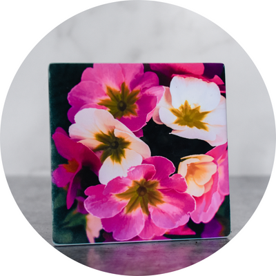 Pink and White Pansy Coaster - Wear the Wonder