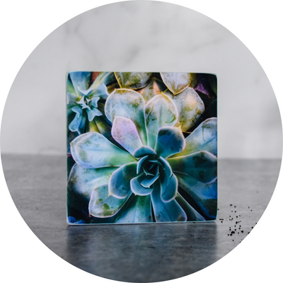 Enchanted Succulent Coaster - Wear the Wonder