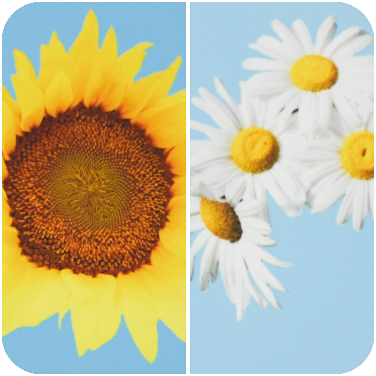 Standard view of sunflower & daisy coasters | Wear the Wonder