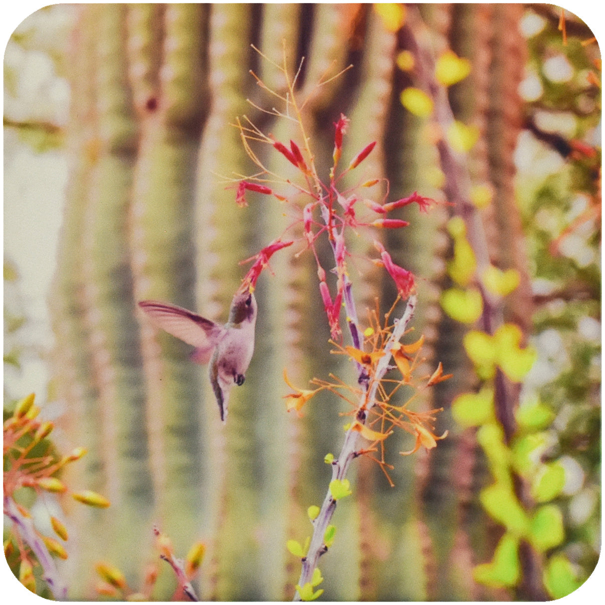 Desert Hummingbird Coaster - Wear the Wonder
