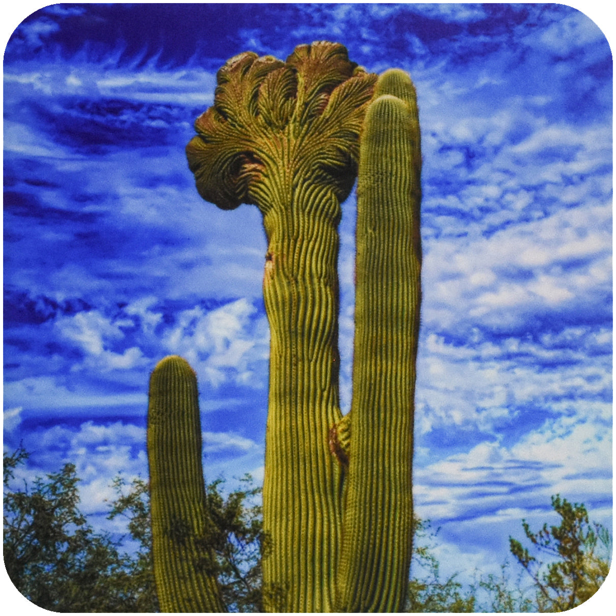 Funky Saguaro Cactus Coaster - Wear the Wonder