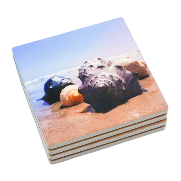 Conch Shells Coasters (Set of 4)