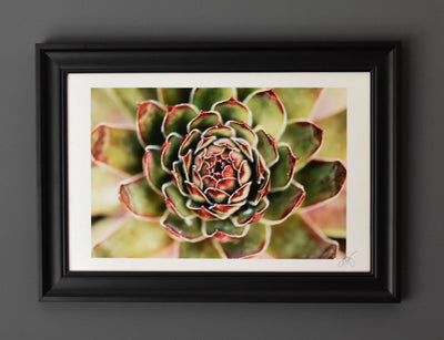 Mesmerizing Succulent Framed Print