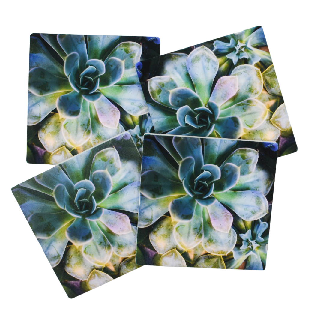 Enchanted Succulent Coasters (Set of 4)