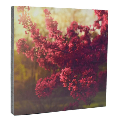Morning Crabapple Art Print