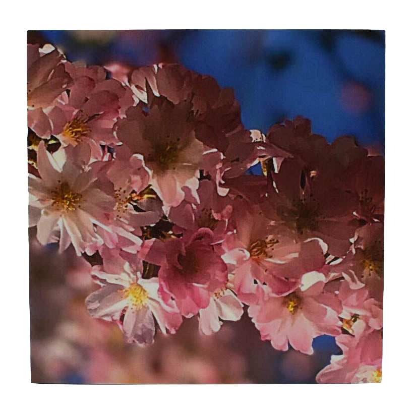 Springtime Blossoms Art Print - Wear the Wonder