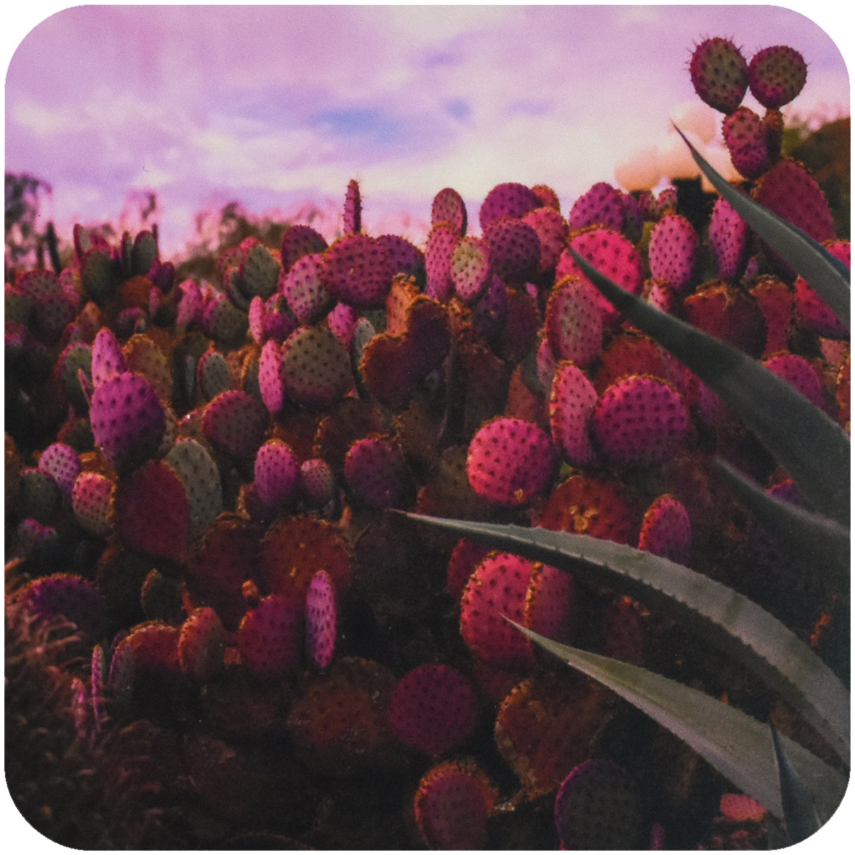 Pink Cactus Coaster - Wear the Wonder