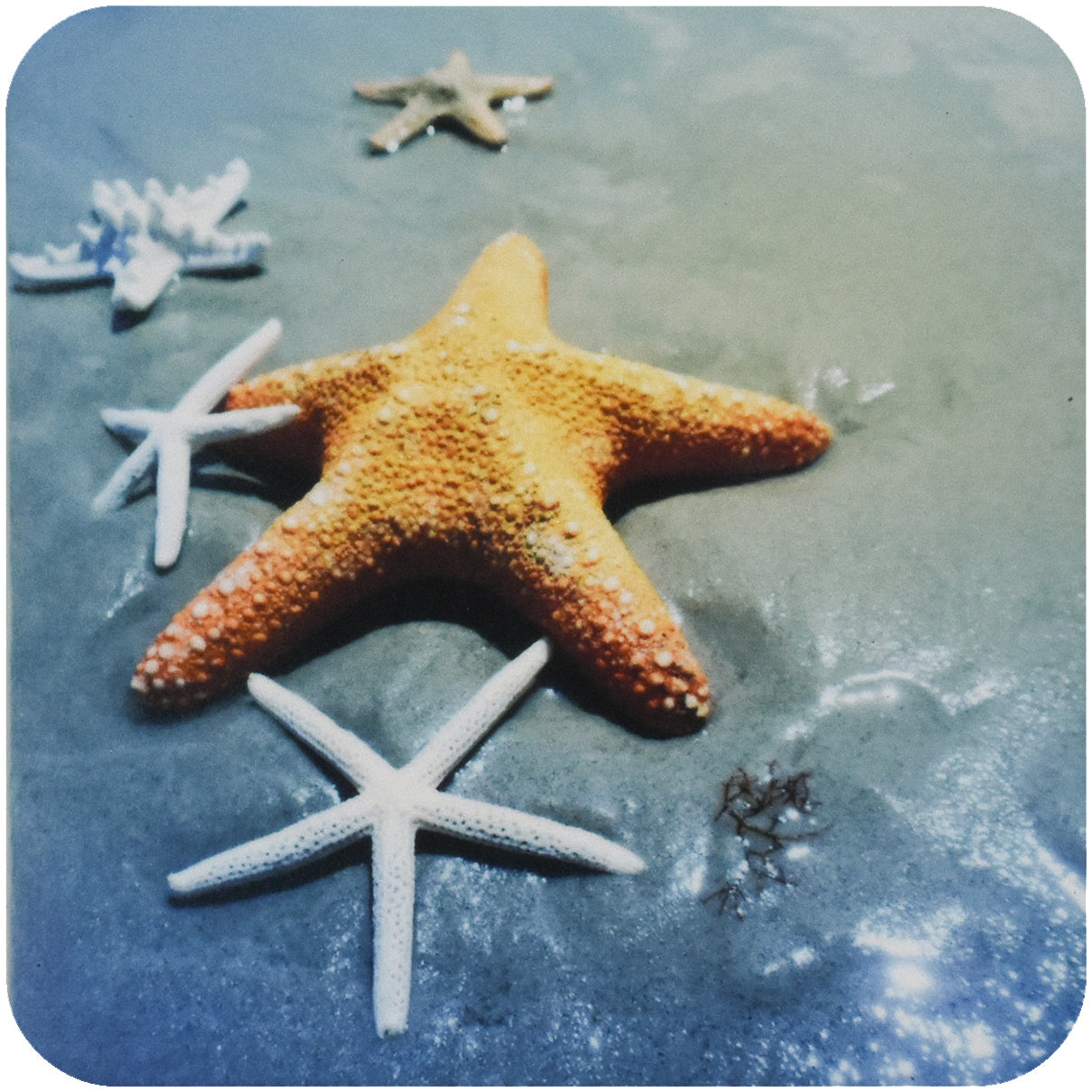 Starfish Coaster - Wear the Wonder