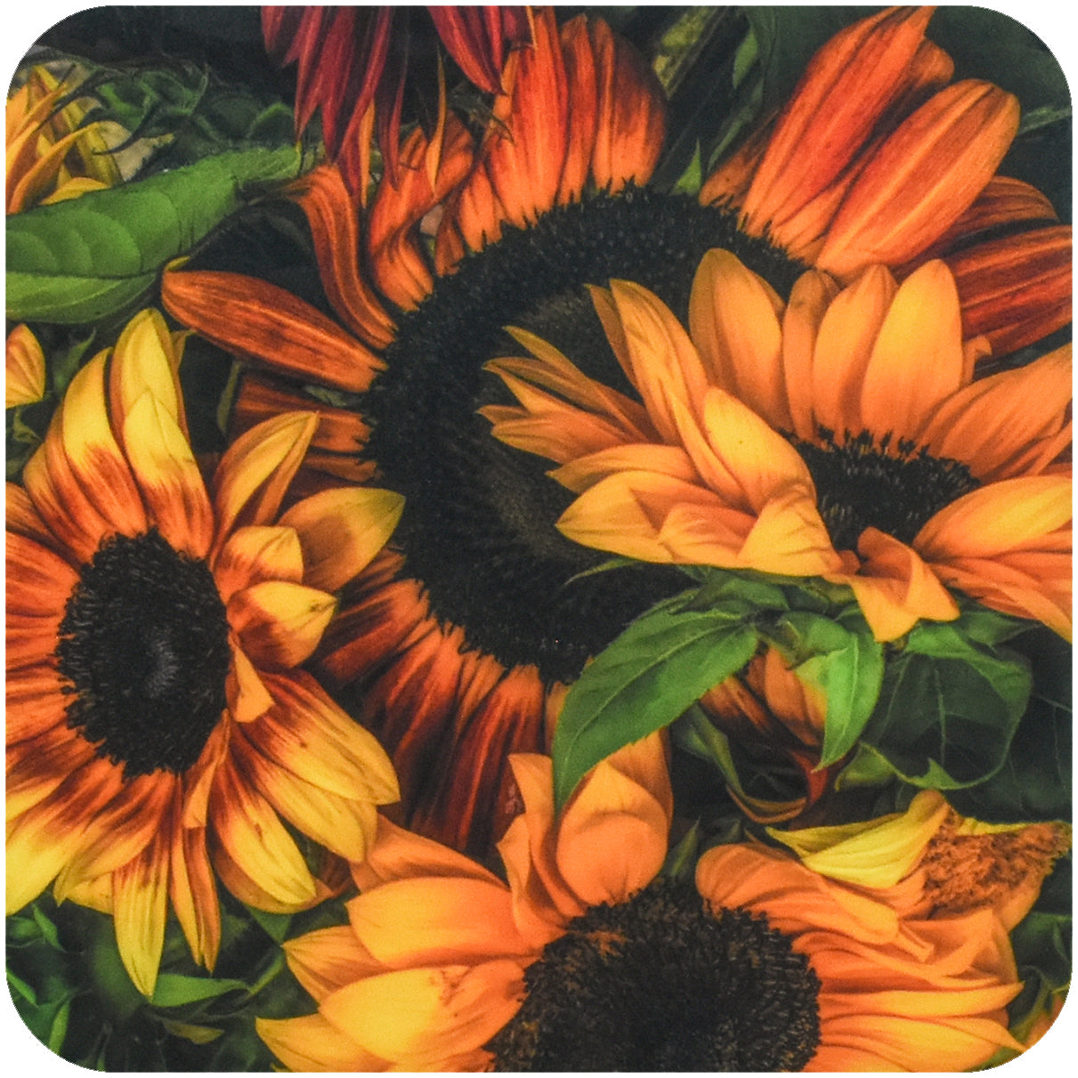 Thousand Suns Sunflower Coaster - Wear the Wonder