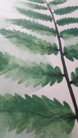 Original A3 Watercolour fern