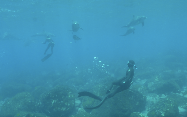 Freediving with the Dolphins of Mikurajima, Japan (by Michelle)