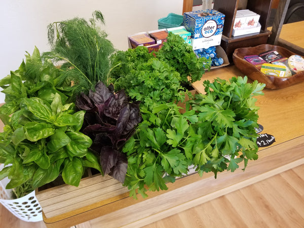 Fresh Basil - 1 bunch - Choose Green or Purple