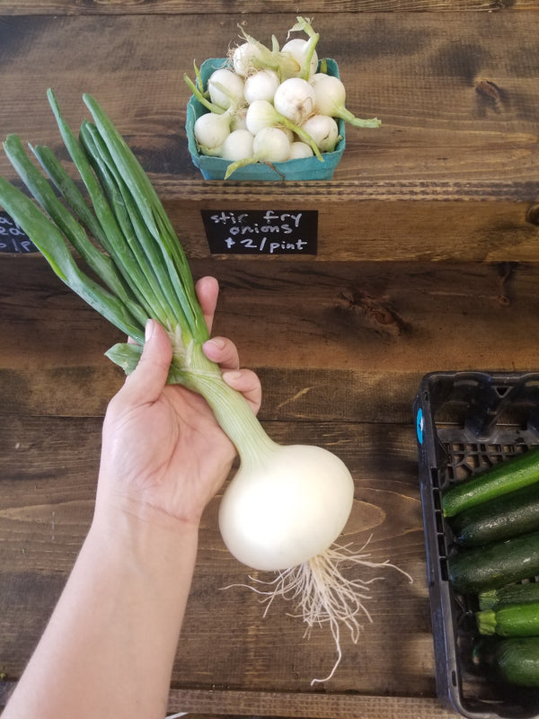 Sweet Onion - Bountiful Beloit