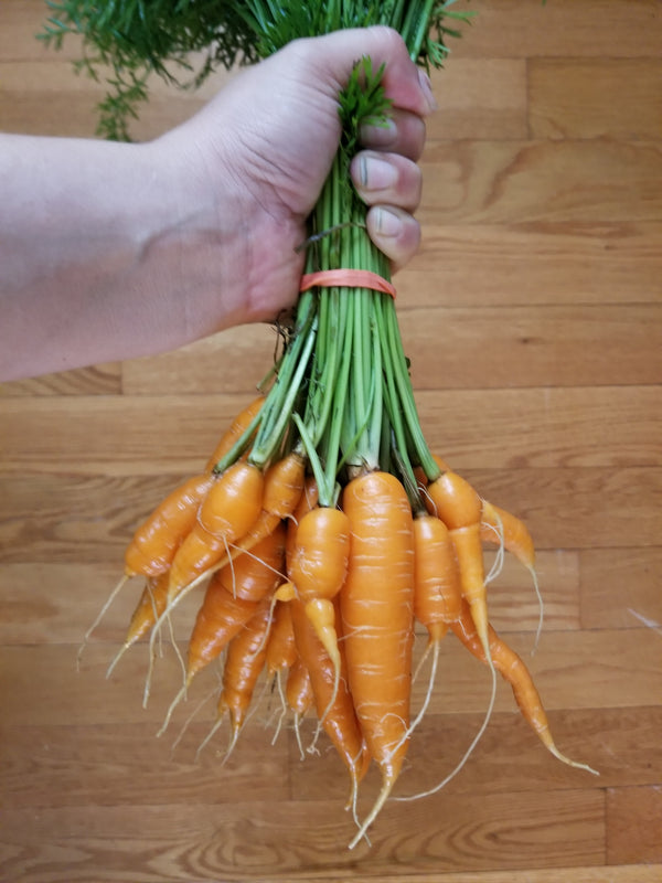 Carrots (priced per medium sized bunch of small carrots)
