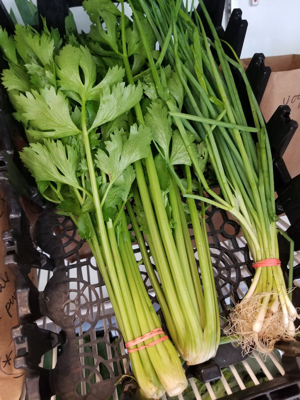 Celery (grown by Bountiful Beloit)