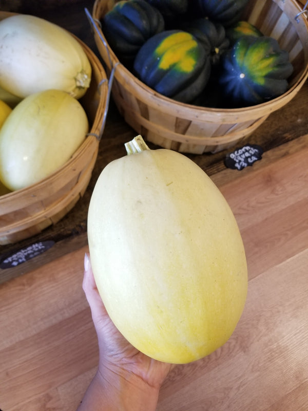Spaghetti Squash - 1 Medium - Bountiful Beloit