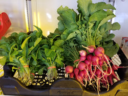 Bunch of Radishes