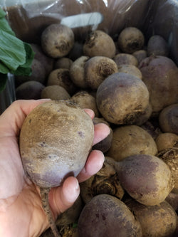 Certified Organic Beets (priced per pound) - Tipi Produce, Evansville