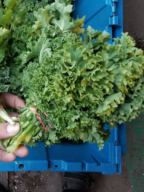 Local Kale - Grown Ecologically by Bountiful Beloit