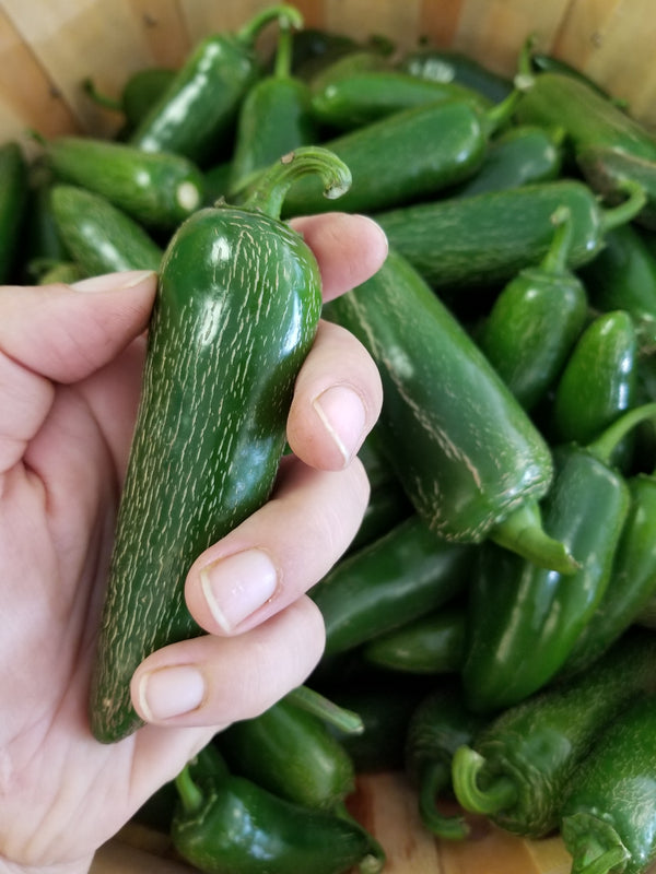 Jalapenos - Naturally grown by Bountiful Beloit