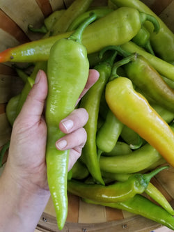 Hungarian Wax Peppers (Chiles Gueros)- Naturally grown by Bountiful Beloit