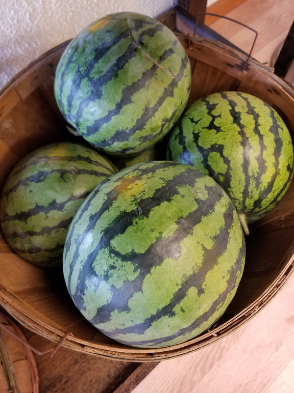 Certified Organic Watermelon, Red - 6-9 lbs - (Tipi Produce, Certified Organic)