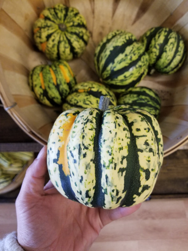 Carnival Squash - 1 medium (~1.5 lb) - Bountiful Beloit
