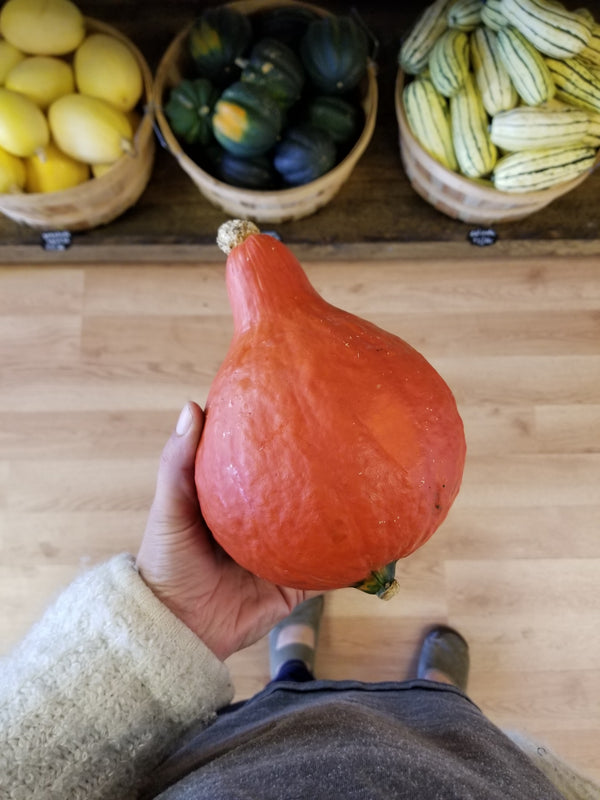 Red Kuri Squash - 1 medium (~2.5 lb) - Bountiful Beloit