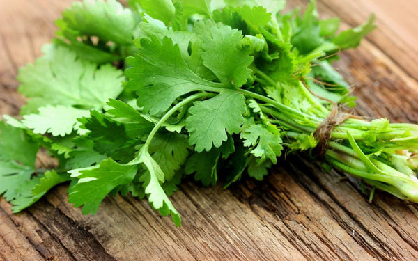 Cilantro (grown by Bountiful Beloit) - One Bunch