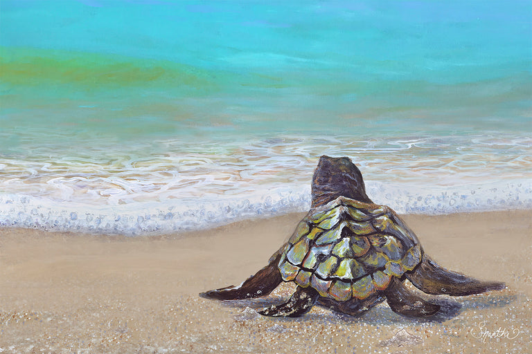 Tropical Art Baby Sea Turtle