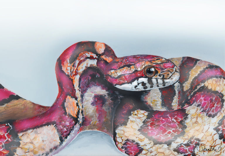 snake art, corn snake art, cool snake art, snake drawing, corn snake decor