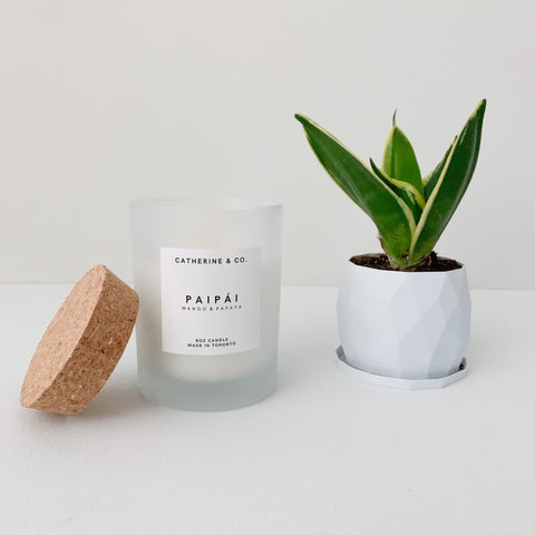 a white frosted glass candle from Catherine & Co, mango and papaya scented, sitting beside a small snake plant.
