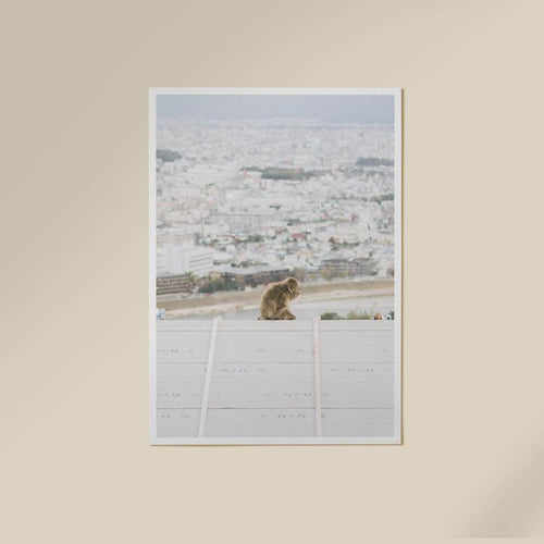 Monkey Arashiyama Wall Art Print