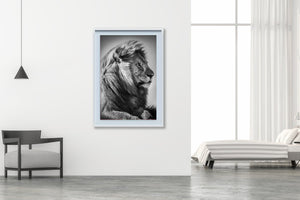 Lion Portrait I