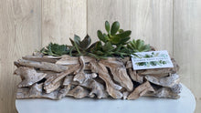 Load image into Gallery viewer, Large driftwood planter