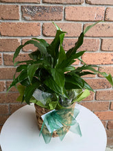 Load image into Gallery viewer, Spathiphyllum plant (Peace Lilly)