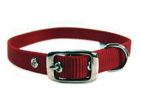 Single Thick Nylon Dog Collar - Wagging Online