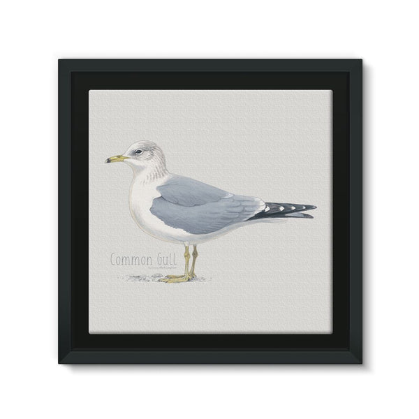 Common Gull Framed Canvas