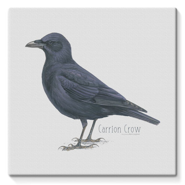 Carrion Crow Stretched Canvas