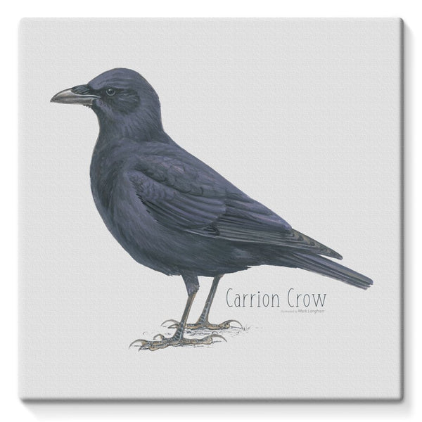 Carrion Crow Stretched Eco-Canvas
