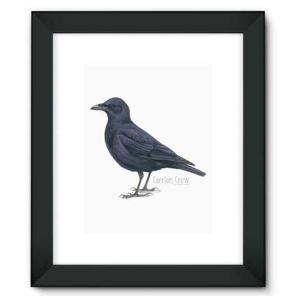 Carrion Crow Framed Fine Art Print