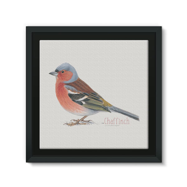 Chaffinch Framed Canvas