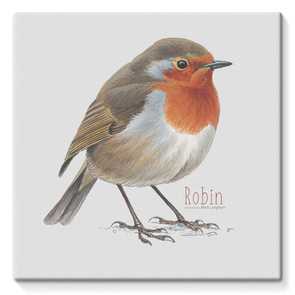 Robin Stretched Canvas