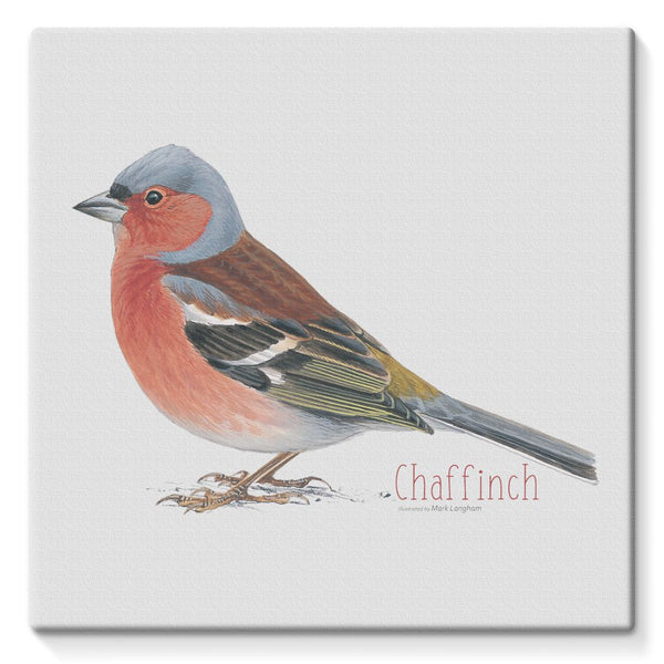 Chaffinch Stretched Canvas