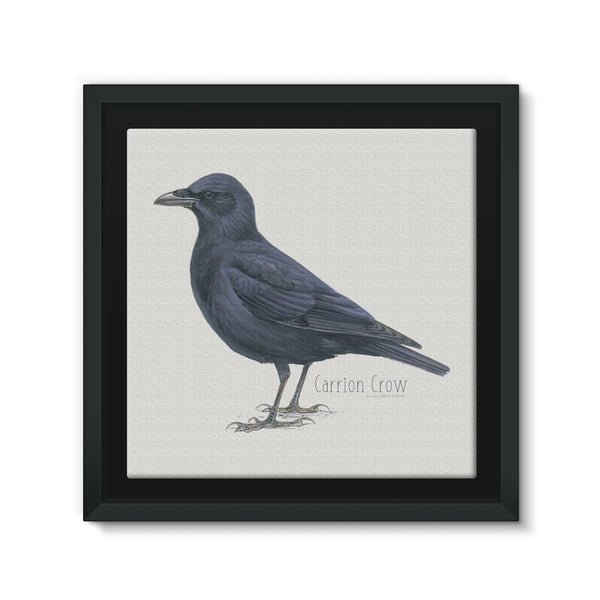 Carrion Crow Framed Canvas