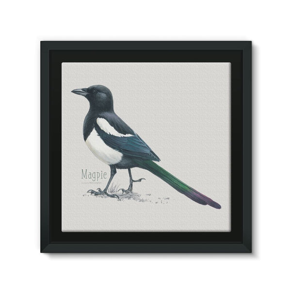 Magpie Framed Canvas
