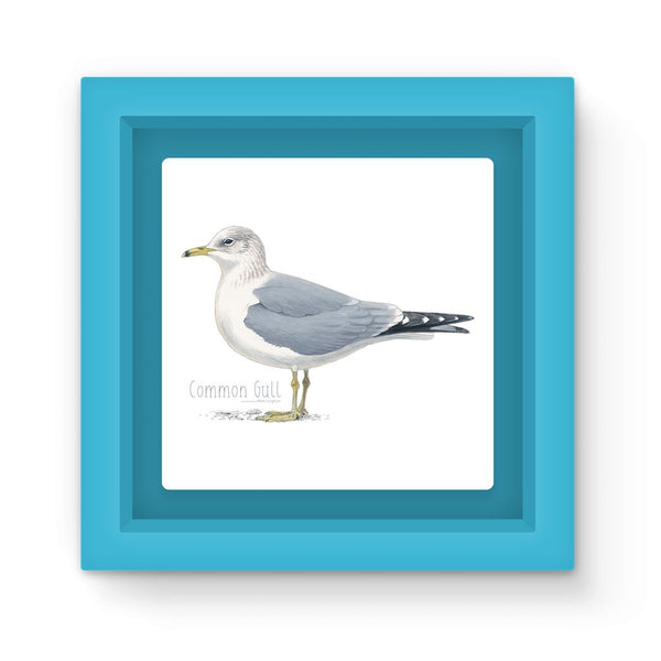 Common Gull Magnet Frame